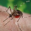 Four Local Zika Cases Reported In The Miami Area